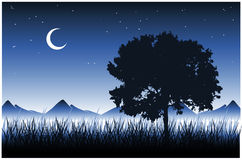 Tree and Grass (Vector). Night Scene with tree, grass and moon Royalty Free Stock Image