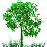 Tree and grass. Vector. Stock Photos