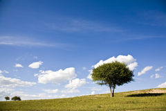 A  tree  in grassland Stock Images