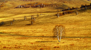 Tree on the Grassland Stock Photography