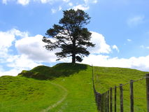 Tree And Grassland stock photo
