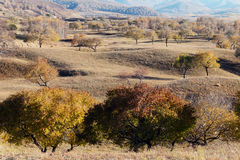 Tree and grassland in autumn Royalty Free Stock Photos