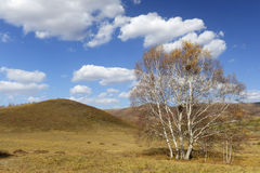 Tree in grassland with cloudy sky in autumn Royalty Free Stock Photography