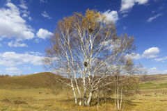 Tree in grassland with cloudy sky in autumn Stock Photos
