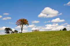 Tree in a grassland, New Zealand Royalty Free Stock Photo