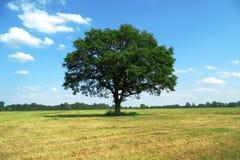 Tree, Grassland, Sky, Woody Plant