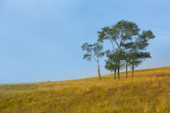 Tree in grasslands Royalty Free Stock Photos
