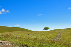A tree on the grasslands. This photo was taken in Bashang Grassland ,Hebei province, china Stock Image