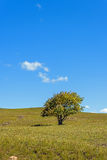 A tree on the grasslands. This photo was taken in Bashang Grassland ,Hebei province, china Stock Photos