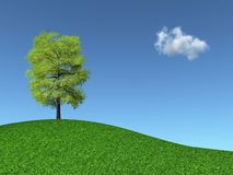 Tree on a grassy hill Royalty Free Stock Photography