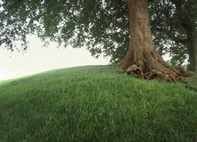 Tree on grassy hill. Stock Image