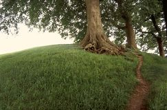 Tree on grassy hill. Royalty Free Stock Photo
