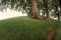 Tree on grassy hill. Royalty Free Stock Photo