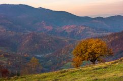 Tree on a grassy hillside in autumn mountains. Beautiful scenery at dawn. small village down the hill in valley Royalty Free Stock Photo