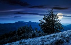 Tree on the grassy hillside on at night. In full moon light. lovely summer landscape of Carpathian mountain Svydovets ridge Royalty Free Stock Photography