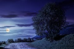 Tree on grassy hillside by the road at night. Tree on grassy hillside by the road turnaround. lovely countryside scenery in mountains at night in fool moon light stock photos