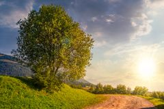 Tree on grassy hillside by the road at sunset. Tree on grassy hillside by the road turnaround. lovely countryside scenery in mountains at sunset Royalty Free Stock Photography