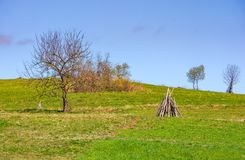 Tree on the grassy hillside. Springtime in rural area Stock Image