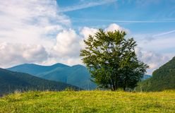 Tree on the grassy meadow in mountains. Early autumn countryside with beautiful cloudscape stock images