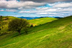 Tree on a grassy slope of Carpathian rural area. Beautiful landscape on a cloudy springtime day stock image