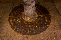 Tree Grate. With fallen leaves on State Street in Madison, Wisconsin royalty free stock photos