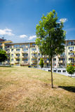 Tree in green area in front of newly built block of flats Stock Photography