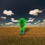 Tree in Green Bulb Stock Photography