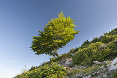 Tree in green dress Royalty Free Stock Photography