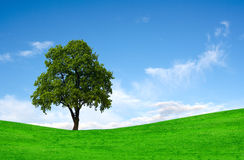 Tree on a green field Royalty Free Stock Image