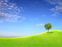 Tree on green field Stock Images