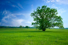 Tree on green field Royalty Free Stock Images