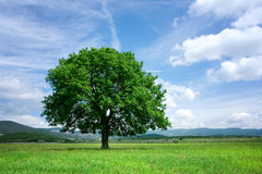 Tree on green field Stock Photo