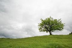 Tree on a green field Stock Photos