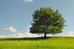Tree on green field Stock Photography