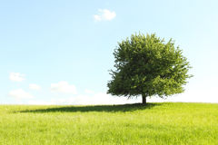 Tree on green field Stock Photos