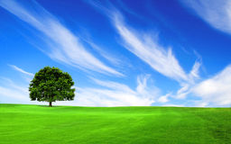 Tree in the green field. With the blue sky Stock Photography