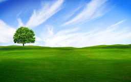 Tree in the green field. With the blue sky Royalty Free Stock Image