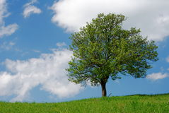 Tree in green field Stock Images