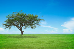 Tree with green field and blue sky Stock Photos