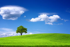 Tree on green field and blue sky Stock Photo