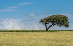 Tree in a green field stock photography