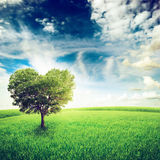 Tree Royalty Free Stock Photos