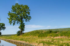 Tree, green field near the water Royalty Free Stock Image