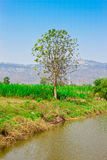Tree in the green field and pond Royalty Free Stock Images