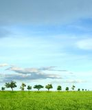 Tree and green field with road and blue sky Royalty Free Stock Images