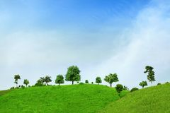 Tree and green field with road and blue sky Royalty Free Stock Photo