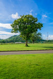 A tree at green field with road in rural Stock Photos