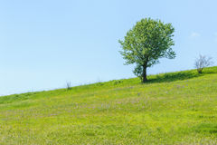 Tree green field sky hill grass landscape blue Stock Images