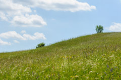 Tree green field sky hill grass landscape blue Royalty Free Stock Photography