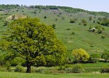 Tree on green field Royalty Free Stock Photos